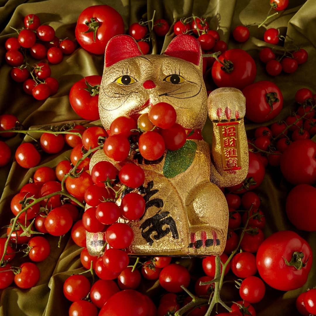 Ascolta Gato Tomato EP di G. Tomato & Lvnar